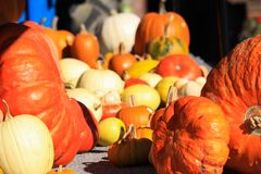Choice of yellow and red pumpkins in different sizes and shapes decorated on a cart in bright autumn light - Netherlands. Choice of yellow and red pumpkins in stock photo