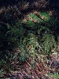 Choinek gałązki na ziemi i gałąź obraz stock