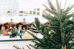 Choinka lub jodła rozgałęziamy się w przedpolu Łyżwiarski lodowisko w Berlin w Alexanderplatz zamazuje w obrazy royalty free