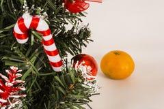 Choinka na białym tle z tangerines Obrazy Stock