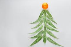 Choinka robić eucaliptus mandarynka i liście Mieszkanie nieatutowy Wakacyjny pojęcie kosmos kopii Obraz Stock