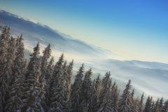 Choinka w górach Zdjęcie Royalty Free