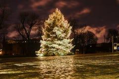 Choinka w miasto parku przy nocą Fotografia Royalty Free