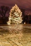 Choinka w miasto parku przy nocą Obraz Royalty Free