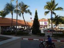 Choinka wśród drzewek palmowych, Koh Samui, Tajlandia Zdjęcie Stock