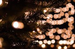 Choinki i dekoraci światła z bokeh tłem Fotografia Stock