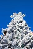 Choinki jodła i duży płatek śniegu na niebieskim niebie Zdjęcia Royalty Free