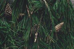 Choinki jodła rozgałęzia się i sosna konusuje odgórnego widok na wieśniaku wo Obraz Royalty Free