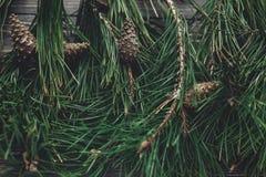 Choinki jodła rozgałęzia się i sosna konusuje odgórnego widok na wieśniaku wo Obrazy Stock