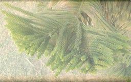 Choinki tła niedźwięczny textured szablon, abstrakcjonistyczny ewidencyjny grafika szablonu projekt obraz royalty free