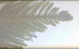 Choinki tła niedźwięczny textured szablon, abstrakcjonistyczny ewidencyjny grafika szablonu projekt fotografia royalty free