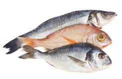 Choise der frischen Fische Lizenzfreie Stockfotografie