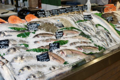 Choise of fish on market Stock Image