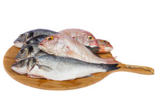 Choise of fresh fish Stock Photos