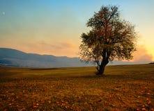 Choisissez l'arbre d'automne image stock