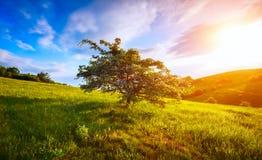 Choisissez l'arbre de floraison sur la colline et le ciel de matin en montagne Photographie stock