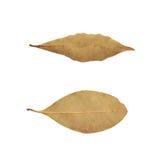 Choisissez la feuille de laurier sèche d'isolement Photo libre de droits