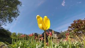 Choisissez la fleur jaune en brise d'été avec les fleurs rouges majestueuses clips vidéos