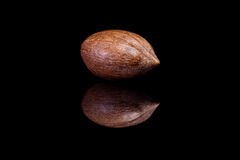 Choisissez la noix de pécan écossée d'isolement sur le backgroun réfléchi noir Image stock