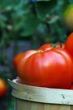 Choisissez la tomate dans un panier Image stock