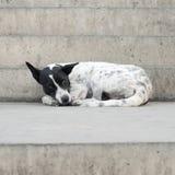 Choisissez le chien vagué perdu sur la rue Images libres de droits