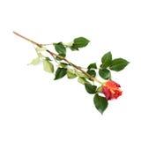 Choisissez le mensonge d'isolement rose au-dessus de la surface blanche Photo stock