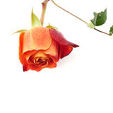 Choisissez le mensonge d'isolement rose au-dessus de la surface blanche Image libre de droits