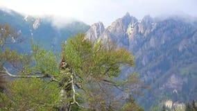 Choisissez le vieil arbre et les hautes montagnes, beau paysage de nature clips vidéos
