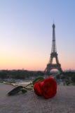 Choisissez rose à Paris Photos stock
