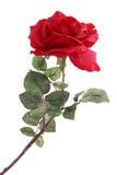 Choisissez rose Photo libre de droits