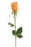 Choisissez rose Image stock