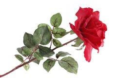 Choisissez rose d'isolement Photos libres de droits