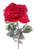 Choisissez rose d'isolement Images libres de droits