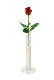 Choisissez rose dans le vase en verre simple rempli de programmes Images stock