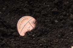 Choisissez une pièce de monnaie britannique de devise de penny dans un pot de compost Images libres de droits