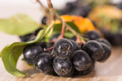 Choke-berry (aronia) - branch with berries Stock Image