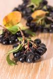 Choke-berry (aronia) - branch with berries. And leaves royalty free stock photography