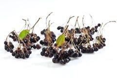 Chokeberries, Aronia, στο άσπρο υπόβαθρο Στοκ φωτογραφία με δικαίωμα ελεύθερης χρήσης
