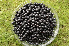 Chokeberries in a bowl. Fresh aronia berries in a glass bowl on the background of green grass Stock Image