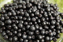 Chokeberries close-up. Fresh aronia berries in a glass bowl Stock Photos