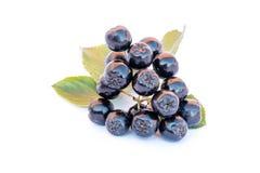 Chokeberry ή melanocarpa Aronia που απομονώνεται στο λευκό Στοκ Εικόνες