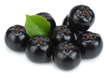 Chokeberry με το φύλλο που απομονώνεται στο άσπρο μαύρο aronia υποβάθρου Στοκ Εικόνες