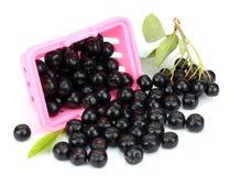 Chokeberry με το φύλλο που απομονώνεται στο άσπρο μαύρο aronia υποβάθρου Στοκ φωτογραφίες με δικαίωμα ελεύθερης χρήσης