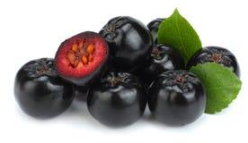 Chokeberry με το φύλλο που απομονώνεται στο άσπρο μαύρο aronia υποβάθρου Στοκ φωτογραφία με δικαίωμα ελεύθερης χρήσης