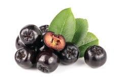 Chokeberry με το φύλλο που απομονώνεται στο άσπρο υπόβαθρο Μαύρα μούρα aronia Στοκ εικόνα με δικαίωμα ελεύθερης χρήσης