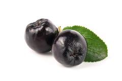 Chokeberry με το φύλλο που απομονώνεται στο άσπρο υπόβαθρο Μαύρα μούρα aronia Στοκ φωτογραφίες με δικαίωμα ελεύθερης χρήσης