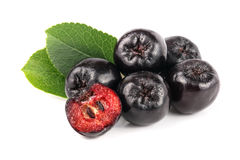 Chokeberry με το φύλλο που απομονώνεται στο άσπρο υπόβαθρο Μαύρα μούρα aronia Στοκ Εικόνα
