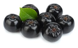Chokeberry με το φύλλο που απομονώνεται στο άσπρο υπόβαθρο Μαύρο aronia Στοκ Εικόνα