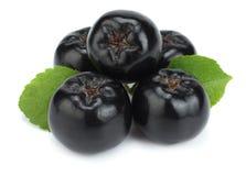 Chokeberry με το φύλλο που απομονώνεται στο άσπρο υπόβαθρο Μαύρο aronia Στοκ φωτογραφίες με δικαίωμα ελεύθερης χρήσης