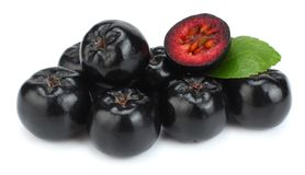 Chokeberry με το φύλλο που απομονώνεται στο άσπρο υπόβαθρο Μαύρο aronia Στοκ Εικόνες